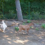 Tier Erlebnispark Bell 0014