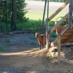 Tier Erlebnispark Bell 0015