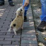 Tier Erlebnispark Bell 0025