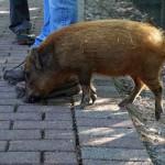 Tier Erlebnispark Bell 0029