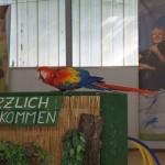 Tier Erlebnispark Bell 0032