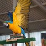 Tier Erlebnispark Bell 0042