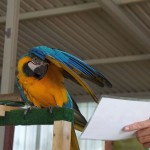 Tier Erlebnispark Bell 0043