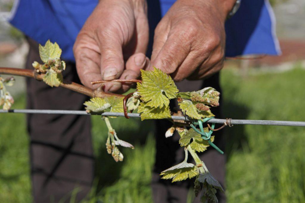 """Wie entsteht Apfelsaft? Das erfahren interessierte Urlauber direkt vom Südtiroler Bauern auf den Obsthöfen der Marke """"Roter Hahn"""". Bildnachweis: """"Roter Hahn""""/Frieder Blickle"""